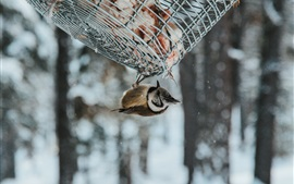 Bird, inverted, basket, snow, winter