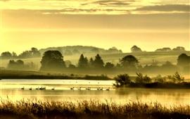 Pássaros, grama, lago, árvores, colinas, nevoeiro