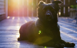 Preview wallpaper Black dog rest, look, sunshine, glare
