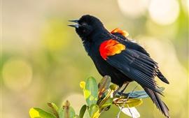 Pássaro de pena preta, folhas verdes