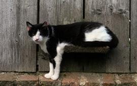 Gato branco preto, fundo de madeira