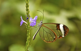 Blue flowers, butterfly, transparent wings