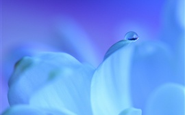 Preview wallpaper Blue petals, water drops, macro photography