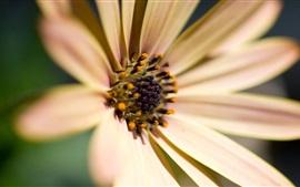 Flor brilhante, pétalas, pólen