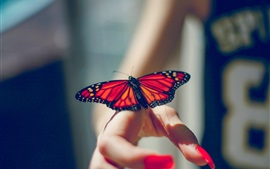 Butterfly, insect, hands