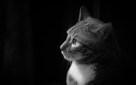 Cat side view, black white picture
