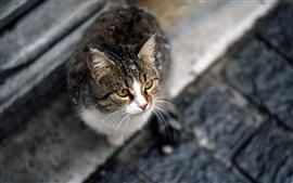 Кошка сидит и смотрит вверх