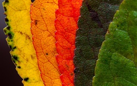 Preview wallpaper Colorful leaves, rainbow colors
