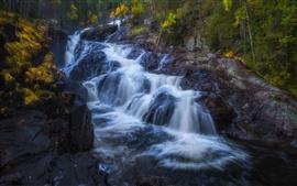Arroyo, cascada, rocas, río, otoño