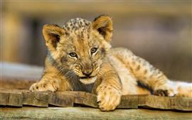 Filhote de leão lindo olhando para você, madeira