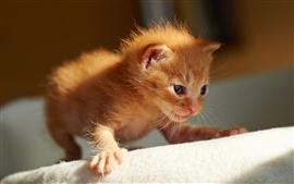Gatos anaranjados lindos primeros pasos