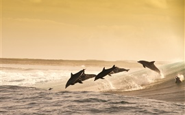 Dolphins jumping at sunset sea, water splash