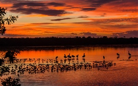Preview wallpaper Evening, birds, lake, red sky, sunset