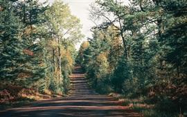 Floresta, árvores, estrada, sombra