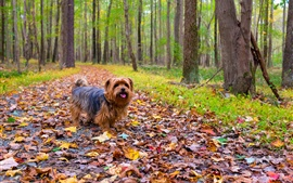 Preview wallpaper Furry dog, walk in the park, leaves, trees, autumn