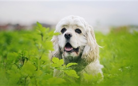 Preview wallpaper Furry white dog, green leaves