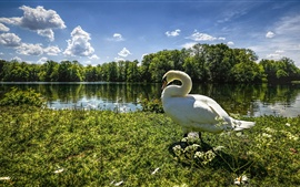 Preview wallpaper Goose, swan, grass, trees, lake