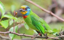 Зеленый попугай, дерево, ветки, листья