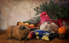 Preview wallpaper Guinea pigs, tangerines, apples, spruce twigs, gift