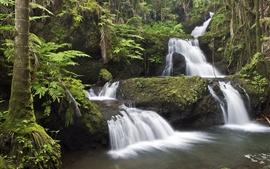 Hawaï, cascade, ruisseau, mousse, arbres