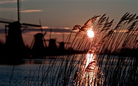 Preview wallpaper Holland, windmill, reed, river, sun