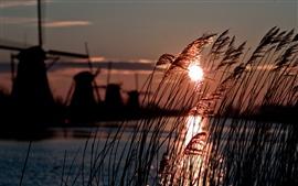 Holanda, molino de viento, caña, río, sol