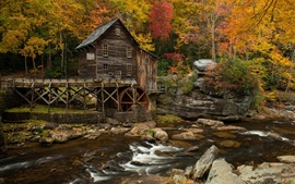 Cabana, casa, pedras, riacho, árvores, outono