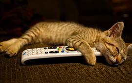 壁紙のプレビュー 子猫は、リモートで休息