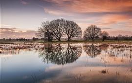 Lago, árvores, reflexão da água, amanhecer