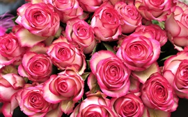 Many pink rose flowers, bouquet