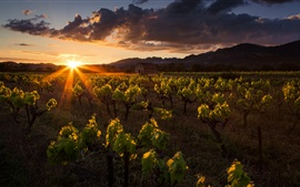Preview wallpaper Morning, vineyard, house, mountains, clouds, sun