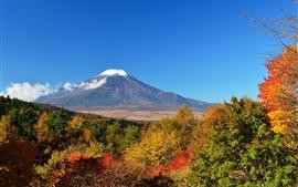 Гора Фудзи, деревья, осень, Япония