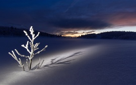 夜、木、厚い雪、冬、日没