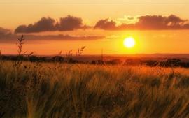 Cielo naranja, hierba, puesta de sol