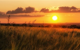 Céu de laranja, grama, pôr do sol