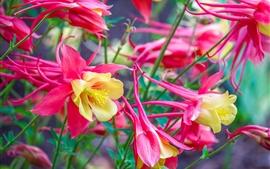 미리보기 배경 화면 핑크 꽃, 꽃잎, 정원