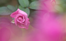 Preview wallpaper Pink rose, leaves, blurry