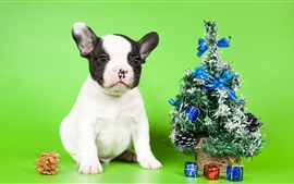 Preview wallpaper Puppy and Christmas tree, decoration, gift
