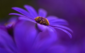 Preview wallpaper Purple flower, petals, macro photography