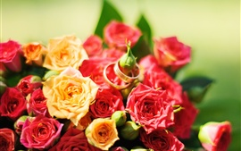 Preview wallpaper Red and yellow roses, rings
