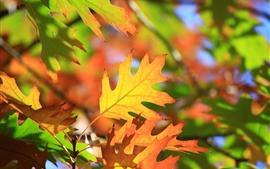 Красные листья, веточки, подсветка, осень