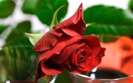 Preview wallpaper Red rose flower bud, bokeh