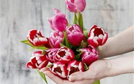 Aperçu fond d'écran Tulipes rouges dans les mains