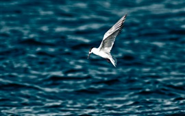 Preview wallpaper Seagull flight, wings, sea, water