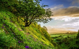 Slope, trees, grass, flowers, green, summer