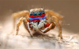 Fotografía macro araña, ojos, insectos