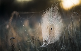 Preview wallpaper Spider web, rain, bokeh