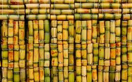 Cana de cana, fundo de bambu