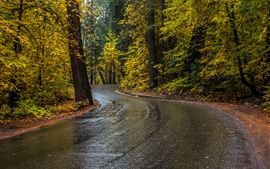 Preview wallpaper Trees, road, wet, autumn