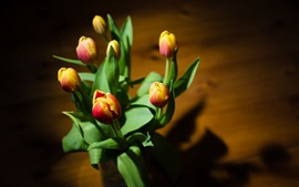 Tulips, yellow red petals, leaves